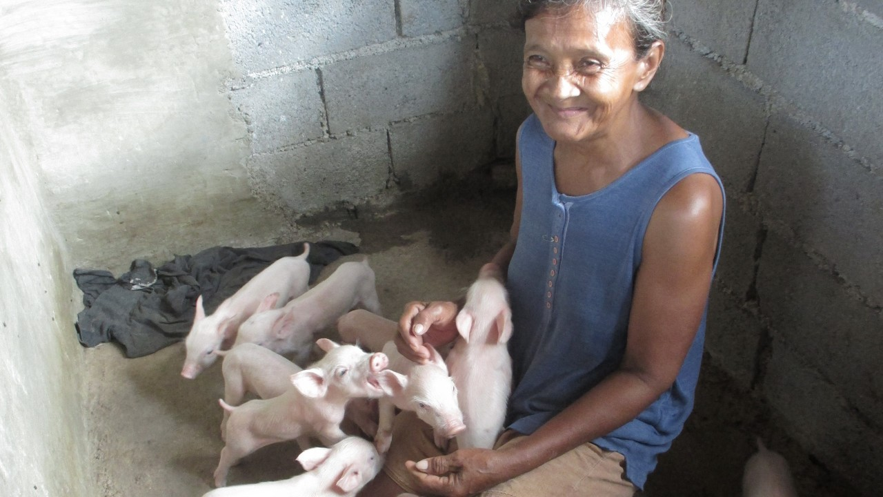 Erlinda with her 14 piglets. The Philippines.