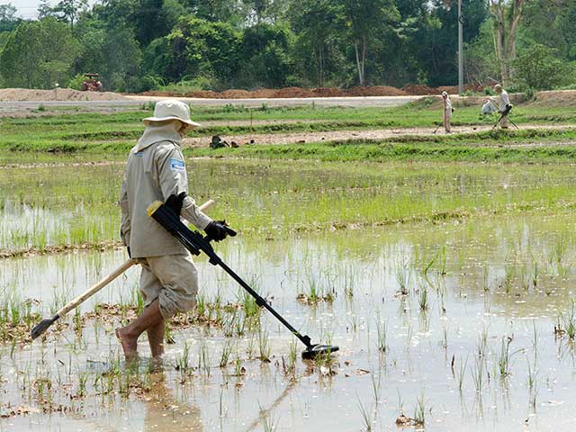 Handicap International deminers search for cluster bombs in a rice paddy, Laos.