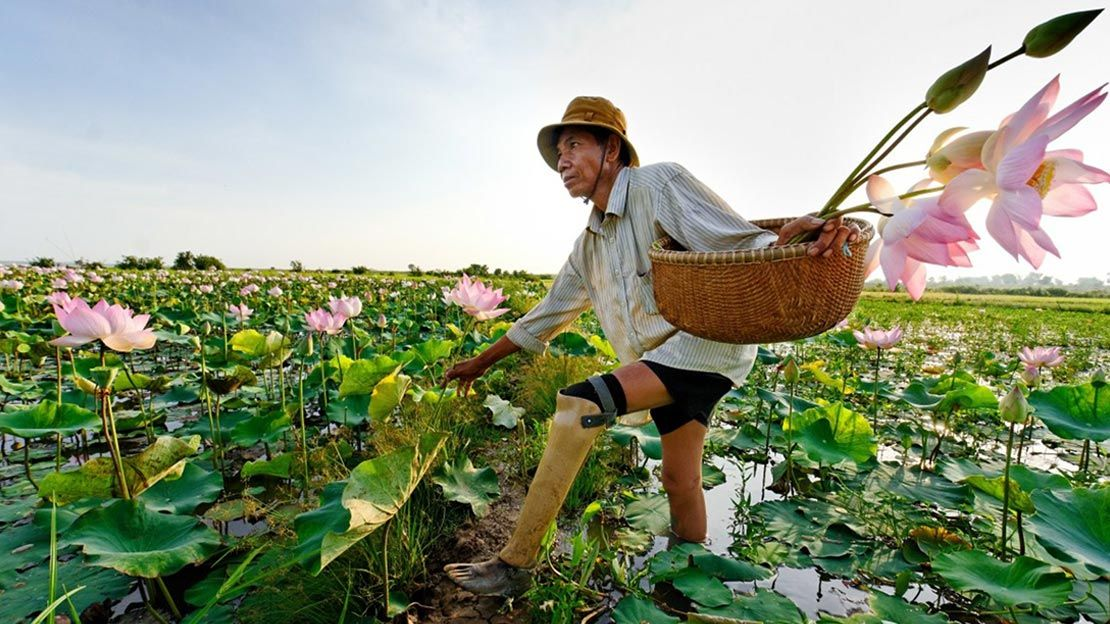 Hab Chorn, 53, lost his leg to a landmine in 1984. HI fitted him with a prosthesis and supported him to regain his independence. Today he works growing lotus flowers and is an active member of his community.